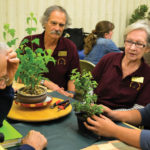 Sacramento Bonsai Club celebrates 70 years