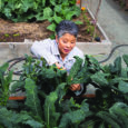 Feed the Soil: Former news anchor Wendy Tokuda's passion for restorative agriculture